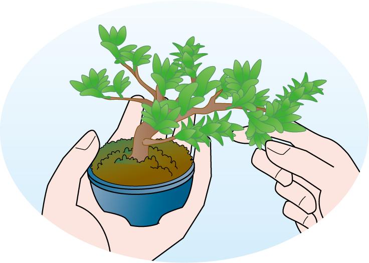 ミニ盆栽を手に持っているイラスト
